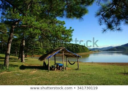 Reizen pijnboom platteland landschap plaats rij Stockfoto © xuanhuongho