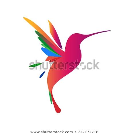 flying hummingbird logo stock photo © tracer