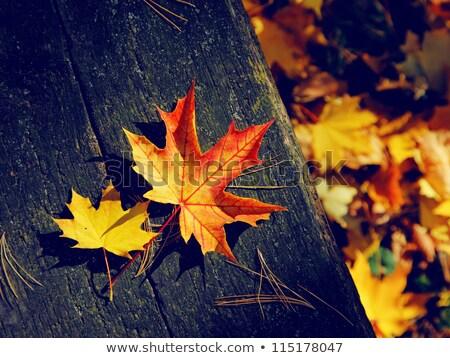 Hojas de otoño oscuro volante anunciante Foto stock © masay256