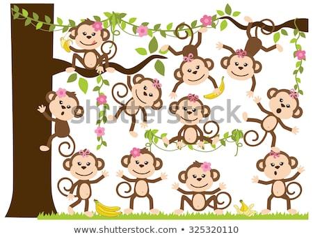 Maymun kız seçmek renk anlamaya boyama kitabı Stok fotoğraf © Olena