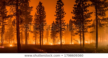 Wildfire dolinie przyjemny ognia wiatr Zdjęcia stock © pancaketom