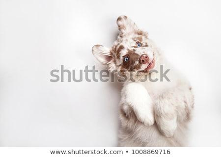Köpek mavi beyaz aile yüz mutlu Stok fotoğraf © Vicasso