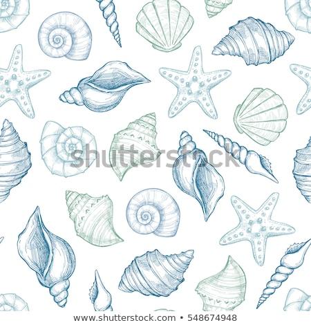 Vektör yaz kart deniz kabukları yarım ton Stok fotoğraf © blumer1979