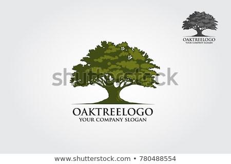 tölgyfa · sziluett · fekete · gyönyörű · ág · tölgy - stock fotó © FOKA