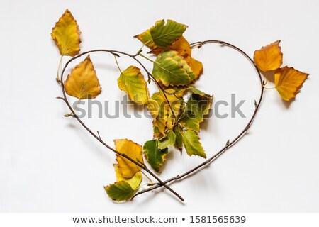 ツリー 心臓の形態 白 春 結婚式 ストックフォト © odina222