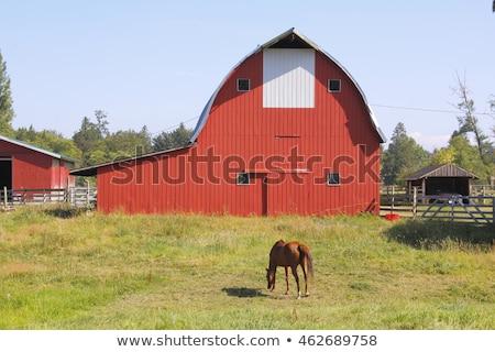 馬 赤 納屋 実例 水 草 ストックフォト © bluering