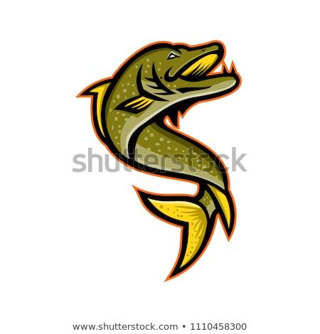 északi sportok kabala ikon illusztráció tigris Stock fotó © patrimonio