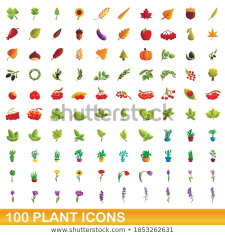 Eggplant Bush with Fruit Isolated Cartoon Icon Stock photo © robuart
