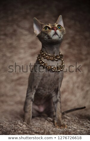 cute whiskas cat wearing golden collar looks up to side Stock photo © feedough