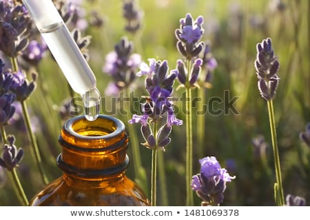 a bottle of lavender essential oil with fresh blooming lavender stock photo © madeleine_steinbach