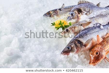 Fresh Catched Raw Fish on Ice  Stock photo © dariazu