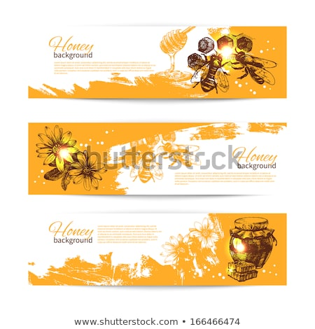 color vintage honey banner stock photo © netkov1