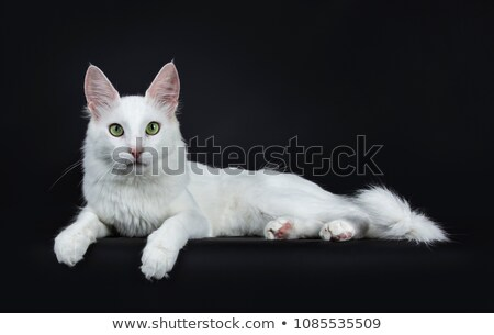 Solide blanche chat yeux verts séance Photo stock © CatchyImages