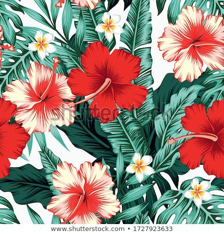 бесшовный дизайна красный гибискуса цветы иллюстрация Сток-фото © colematt