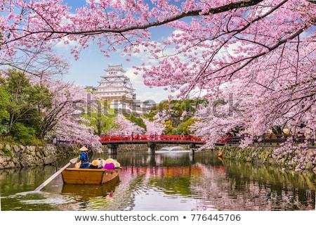 sakura · japans · bloem · voorjaar · abstract - stockfoto © daboost