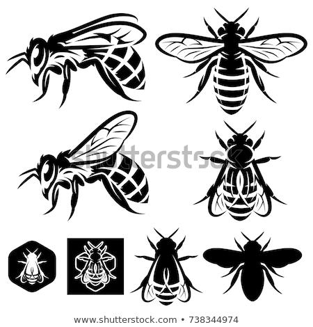 Сток-фото: графических · Bee · улей · различный · продукт
