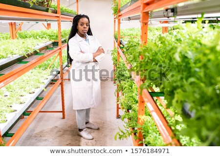 Confident African biologist in workwear standing in aisle inside greenhouse Stock photo © pressmaster