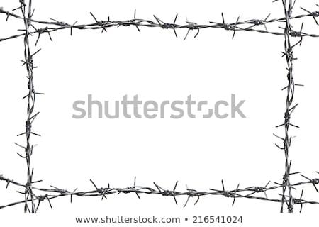 колючую проволоку кадр квадратный форма белый изолированный Сток-фото © evgeny89