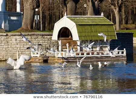 Zwaan nest Tallinn huis Stockfoto © backyardproductions
