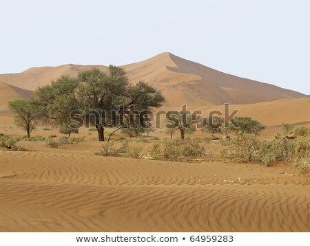 sand dune in namib nauktuft national park namibia stock photo © photoblueice