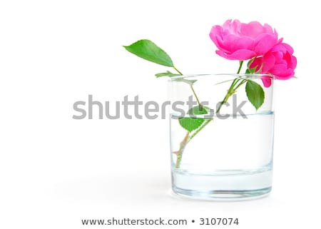 Rosehip flower in a glass of clear water, Stock photo © ozaiachin
