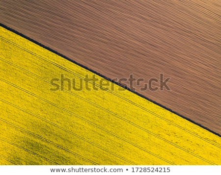Violación campo hermosa agricultura flor textura Foto stock © romvo