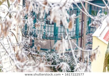 Congelada árvore ramo inverno Foto stock © filmstroem