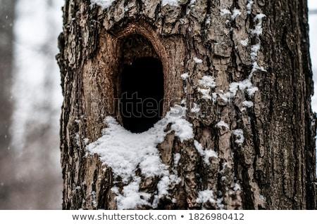 üreges fa erdő fa fák éjszaka Stock fotó © Witthaya