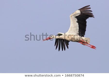 Gólya ág baba természet madár állat Stock fotó © njaj