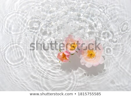 piros · rózsa · csobbanások · piros · fekete · rózsa · természet - stock fotó © zdenkam