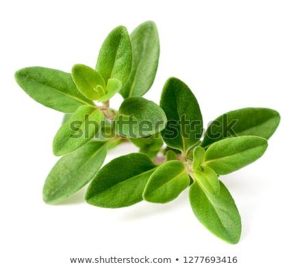 Fresh thyme on white background Stock photo © Kesu