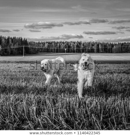Black&white photo of perfect couple Stock photo © konradbak