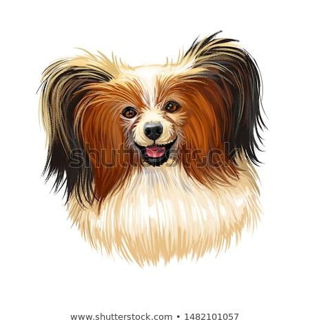 Cute · молодые · собака · цветения · луговой · цветок - Сток-фото © capturelight