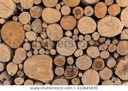 rough tree wood bark natural texture stock photo © latent