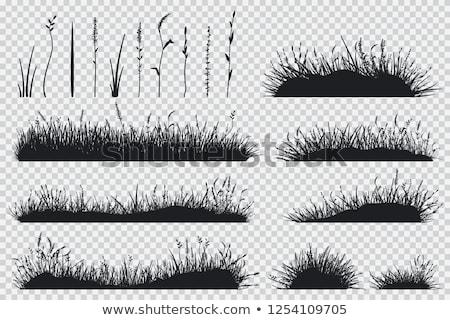 Marsh Grass Stock photo © chrisbradshaw