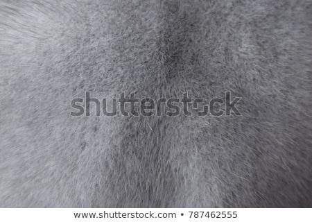 short blue fur texture Stock photo © sfinks