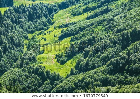 Erdő domboldal Stock fotó © derocz