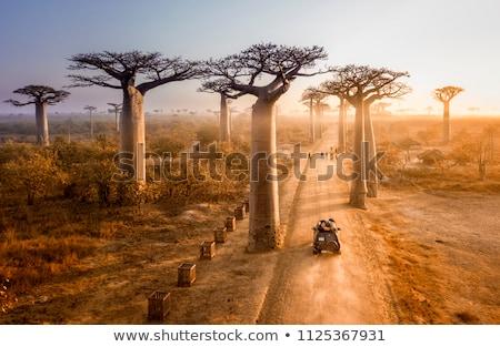 silhueta · pôr · do · sol · ilustração · floresta · paisagem · fundo - foto stock © adrenalina