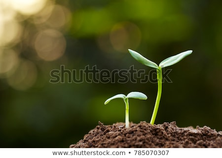 spring soil with young shoots of plants stock photo © tashatuvango