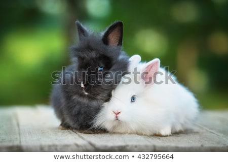 Two young rabbits Stock photo © Ximinez