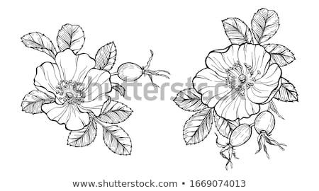 belo · jardim · flor - foto stock © fotoyou