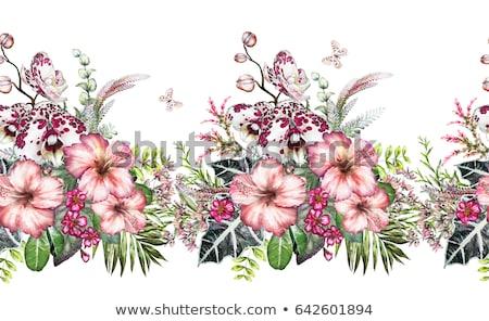 Stockfoto: Hibiscus And Butterflies Border