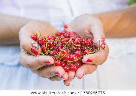 Ripe red-currants. stock photo © EFischen