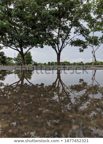 Boom reflectie hemel water bos Stockfoto © Backyard-Photography