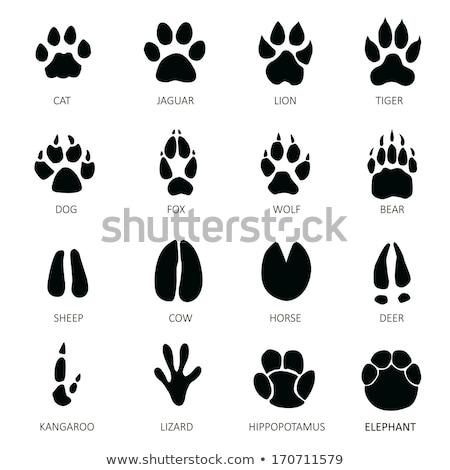 Lábnyomok vadállatok természet felirat medve szarvas Stock fotó © adrenalina