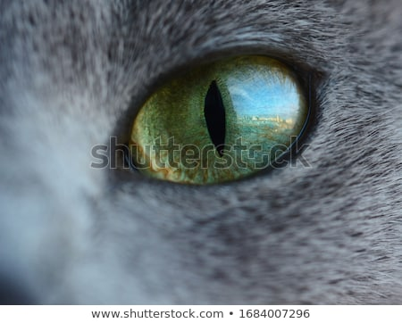 Testa cat gli occhi verdi ritratto Foto d'archivio © meinzahn