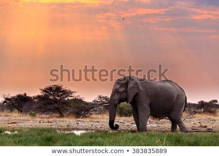afrika · fil · kapalı · toz · büyük · park · Namibya - stok fotoğraf © artush