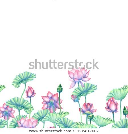 Rózsaszín lótusz keret terv copy space virág Stock fotó © hpkalyani
