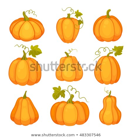 Agricultural plant isolated on white background. Orange and yellow pumpkins with leaves and stalks.  stock photo © teirin_toys