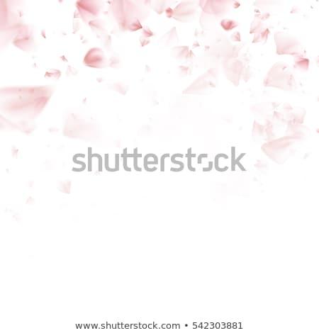 Kiraz sakura çerçeve eps 10 Stok fotoğraf © beholdereye